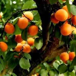 Fruits de nos vergers